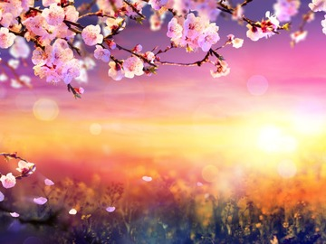 Selling: SPECIAL OFFER: Spring Psychic Reading & Spell Combination!