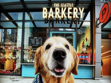 Employee Engagement & Team Building: Mutt-estroni Soup with The Seattle Barkery (<20 Attendees)
