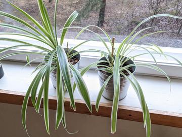 Selling:  Easy-care houseplants