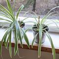Myydään:  Easy-care houseplants