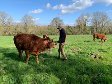 Vente avec paiement en direct: Colis de boeuf viande bio - 10 kg