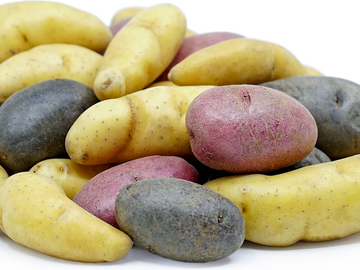 pay by mail only, w/ request form: Mixed Fingerling varieties