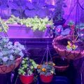 1 Hour Service (with booking calendar): Indoor Growing Online Consultation Call