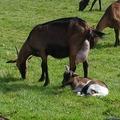 """Vente avec paiement en direct: La ferme de la chevrière :""""Produits laitiers chèvre """""""