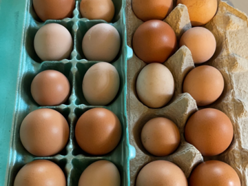 Selling With Online Payment: Brown Fresh Chicken Eggs