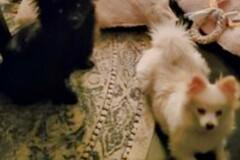 : Lola & Jack