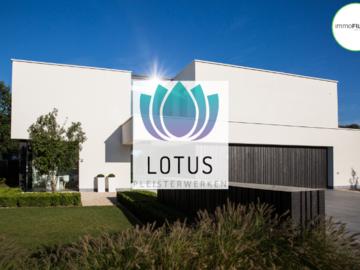 .: Lotus | Pleisterwerken