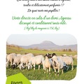Vente avec paiement en direct: VENTE DIRECTE AGNEAUX FERMIERS
