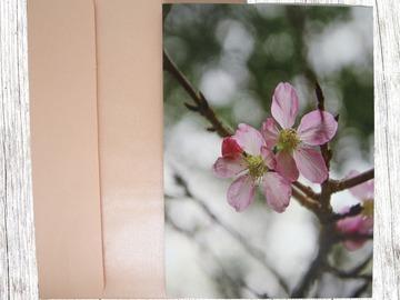 : Spring Greeting Card 2 (Blooming Pink Flower)