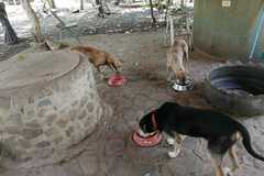 Anuncio: Perritos en Guanacaste- Las Juntas Abangares