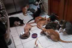 Anuncio: Gatitos en adopción- las Juntas de Abangares