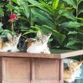 Anuncio: 4 felinos te buscan a vos