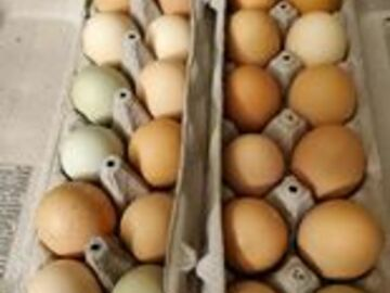 Selling Without Online Payment: Chicken Eggs sold in dozens