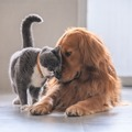 : MORE Adoptable Pets