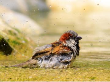 Partage: Les oiseaux ont besoin d'eau