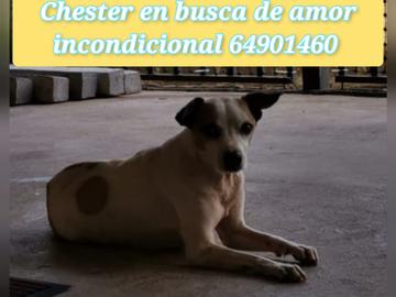 Anuncio: Chester en adopción responsable