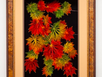 Sell Artworks: 24x36 Japanese Maple Fullmoon
