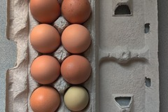 For sale: Fresh Eggs from Happy Hens
