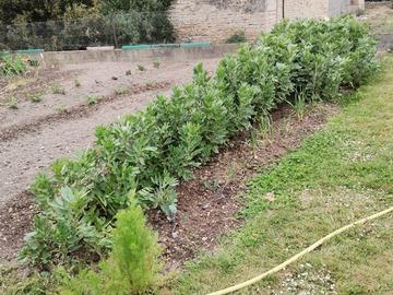 Vente: Plants légumes