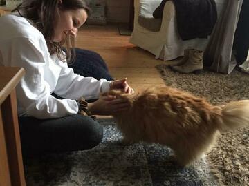 Dienstleistung: Katzen- & Hundesitting