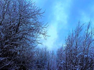 Sell Artworks: Winter Whisper