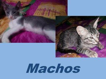 Anuncio: Adopción Gatitos Responsable
