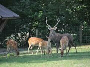 Workshop Angebot (Termine): Besuch des Tierparks Bruderhaus