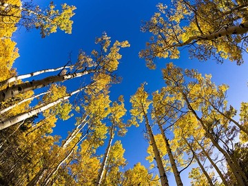 Selling with online payment: Telluride Sky