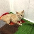 Anuncio: Gatitos abandonados en una caja