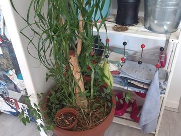Don: Donne plantes d'intérieur saint-genis laval