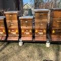 Requesting Land: Alaska beekeeper seeking site for apiary