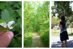 Actualité: Balades botaniques