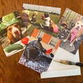 Selling: This Is My Pittie Face Set of Four Note Cards