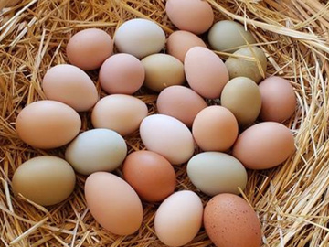 Selling With Online Payment: Farm fresh Eggs