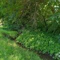 Land Available for Lease: Urban Neighborhood Organic Fenced with Stream. Plenty of Flowers.