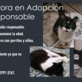 Anuncio: Aurora en adopción responsable