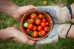 NOS JARDINS A PARTAGER: Jardin à potager contre entretien tonte