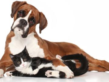 Actualité: Qui garde vos animaux pendant les vacances ?