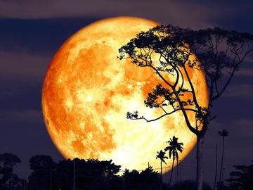 Selling: JULY Full Moon SPELL & READING COMBINATION. Buck Moon!