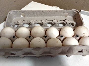 Selling Without Online Payment: Duck Eggs
