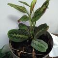 Don: Don de plantes d'interieur