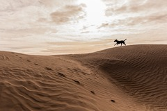 Info Only: Little Sahara Sand Dunes