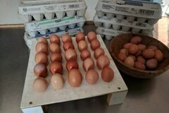 Selling Without Online Payment: Farm fresh eggs