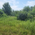 Land Available for Lease: Land available for beekeepers