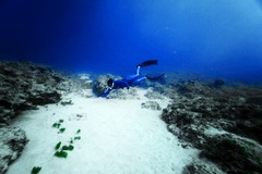 Freediving courses: Discover Freediving One Day Course - 1-on-1 - Xiaoliuqiu, Taiwan