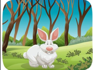 Entraide: Soins à un bébé lapin nain pendant congés 7 au 14 aout