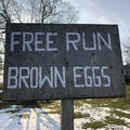 Selling With Online Payment: FARM FRESH FREE RANGE BROWN EGGS