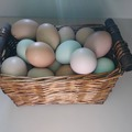 Selling Without Online Payment: Farm Fresh Chicken and Guinea Fowl Eggs