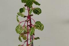 Vente: Plantes intérieur