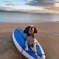 For Rent: Surf SUP & Paddle